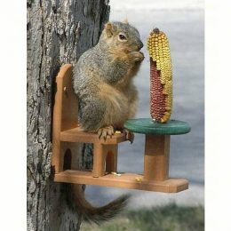 Squirrel Feeders